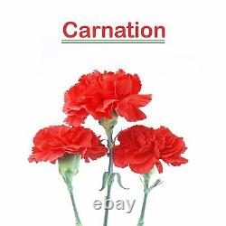 Carnation Oil 100% Natural Pure Undiluted Uncut Essential Oil 10ml To 500ml