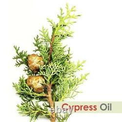 Cypress Oil 100% Natural Pure Undiluted Uncut Essential Oil 10ml To 500ml