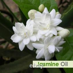 Jasmine Oil 100% Natural Pure Undiluted Uncut Essential Oil 10ml To 500ml